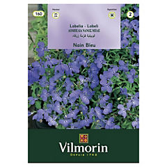 Semillas flor Lobelia azul 5 gramos