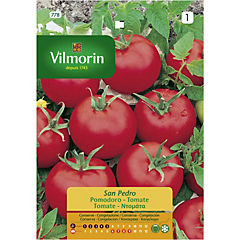 Semilla Tomates 5 gramos