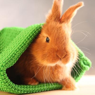 Accesorios para Conejos y Hamster