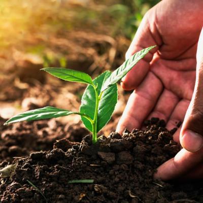 Tierras, semillas y fertilizantes