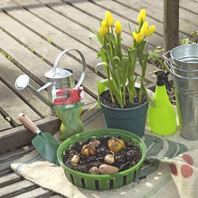 Semillas y Bulbos