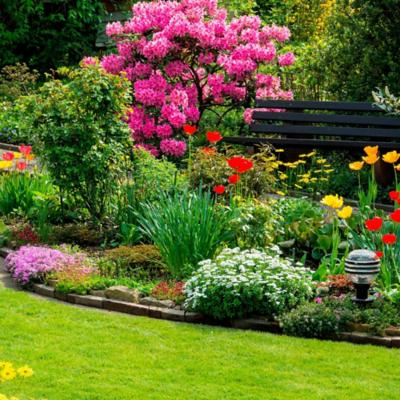 Plantas y pasto