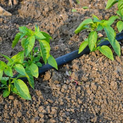 Riego de jardin for Riego automatico jardin