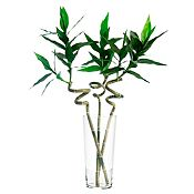 Lucky Bambú 91 cm