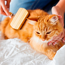 Productos de Aseo para Gatos