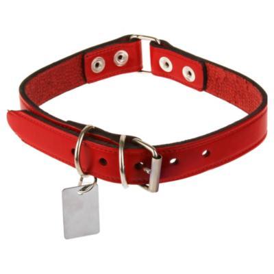 Collar para perro de cuero con placa