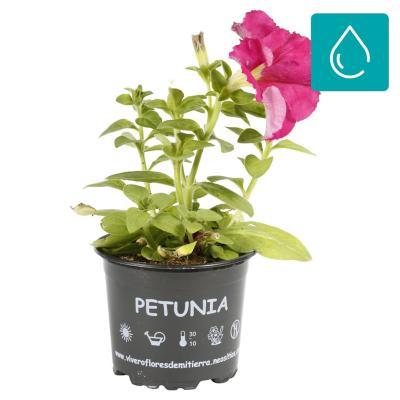 Petunia 0,10 m