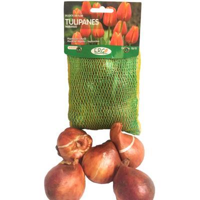 Bulbo tulipán surtido 5 unidades