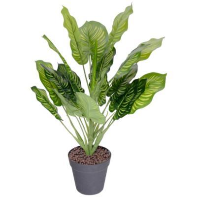 Planta en macetero 57 cm Variedad de Colores