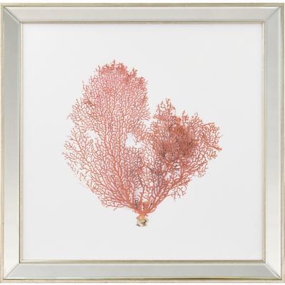 Cuadro Coral rojo 50x50 cm