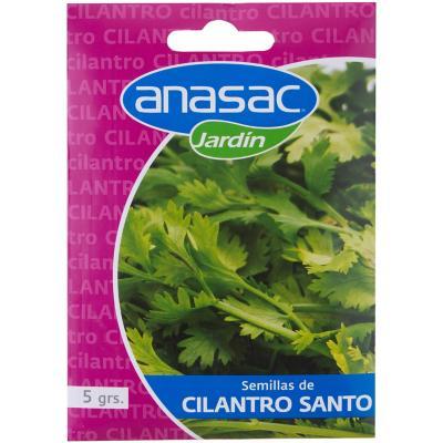 Semilla aromatica cilantro santo 5 gramos