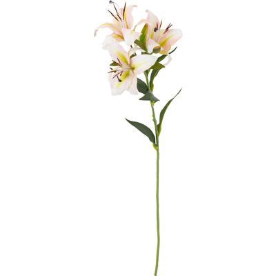 Lilium 3 flores 66 cm