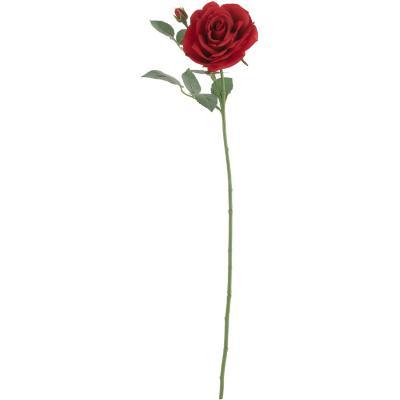 Rosa maggi 70 cm rojo