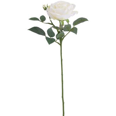 Rosa maggi 70 cm blanco