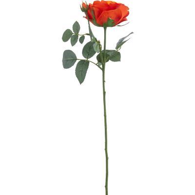 Rosa maggi 70 cm naranjo
