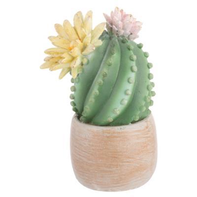 Cactus con Flores Rosa 20 cm
