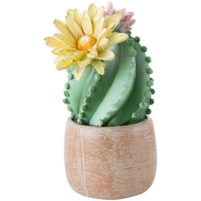 Suculenta con Flores 18 cm
