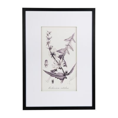 Cuadro con dibujo botánico