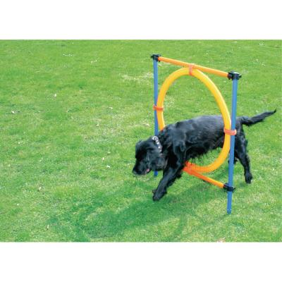 Aro agility perro