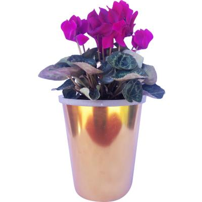 Cyclamen Metis 0,12 m CT10
