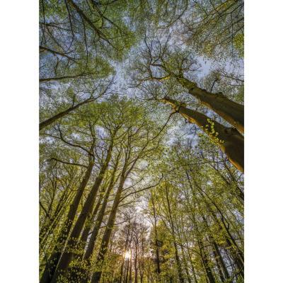 Fotomural canopy 254x184 cm