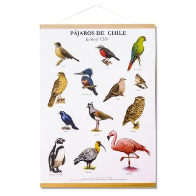 Póster 15 pájaros de chile con colgador