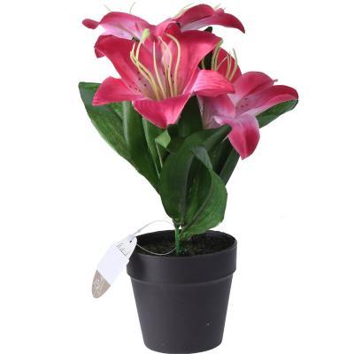 Arreglo Lily maceta Variedad de Colores