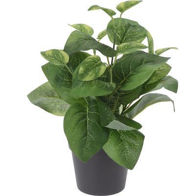 Arreglo planta maceta 29 cm Variedad de Colores