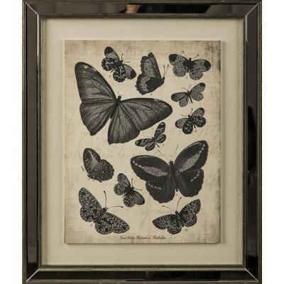Cuadro Mariposas 2 46x46 cm