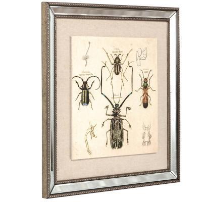 Cuadros Escarabajos 46x46 cm