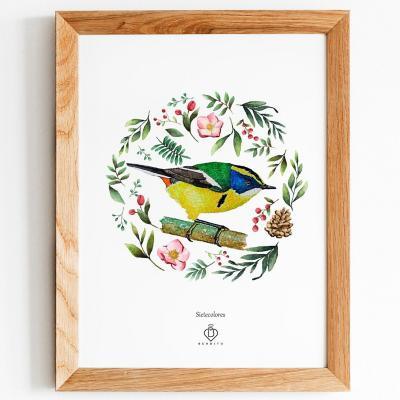 Cuadro aves de chile sietecolores 28x33 cm