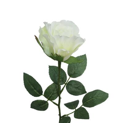 Vara Rosa Mia 62 cm blanco