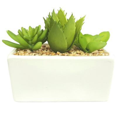 Planta Decorativa Suculentas y Aloe Maceta Blanca
