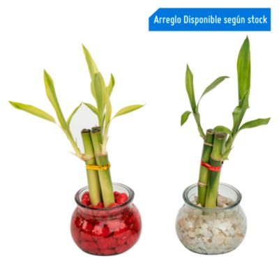 Lucky Bambu Ii