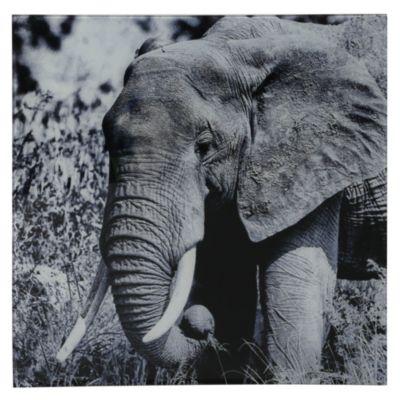 Cuadro vidrio elefante 40x40cm
