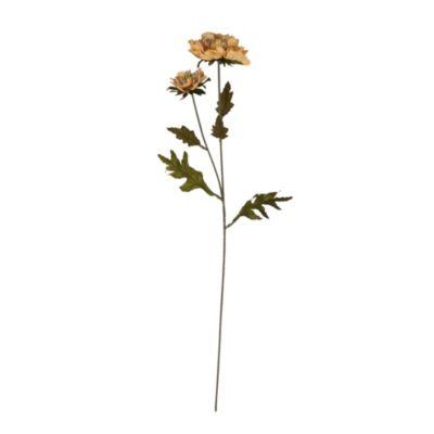 Vara Scabiosa marrón 60cm