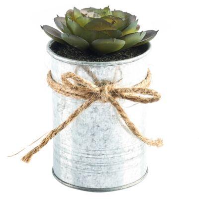 Maceta Zinc con Planta