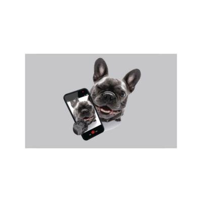 Limp Dog Celular 50x80cm