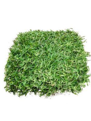 Grass Americano m2 (Lurin)