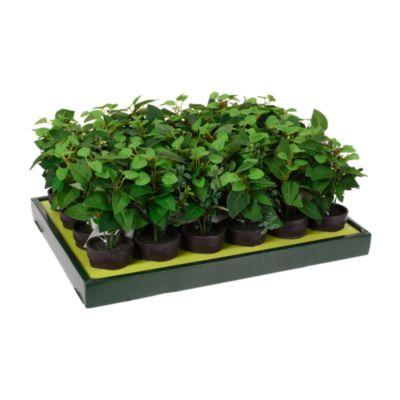 Planta en Maceta Negra 20cm