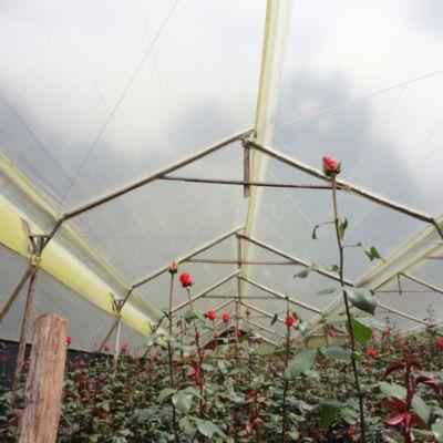 Agrolene CA.6 verde 5mx50m