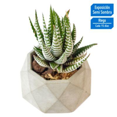 Cactus en Maceta Geometrica Ch