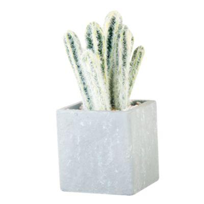 Cactus Oeste 19cm