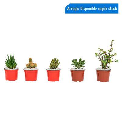 Cactus en macetita
