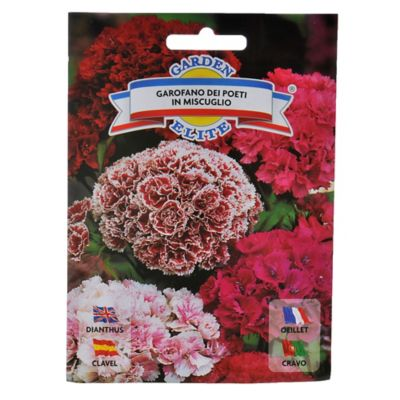 Semillas de flores clavel poeta