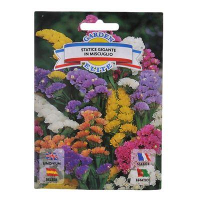 Semillas de flores statice