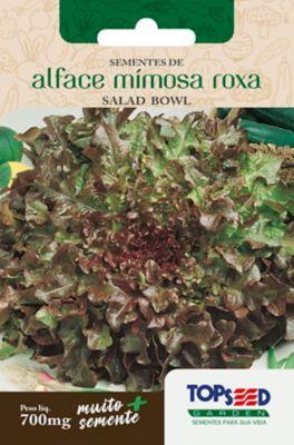 Semente Horta Alface Mimosa Salada Bowl, Roxa