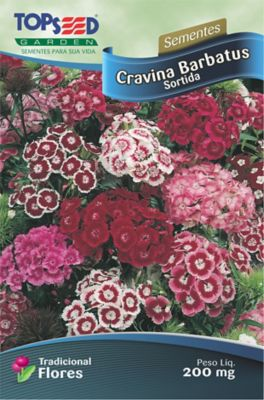 Semente Flor Cravina Barbatus Sortida