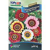 Semente Flor Chrysanthemum Burrigde