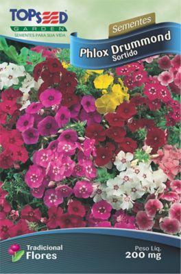 Semente Flor Phlox Drummond, Sortida
